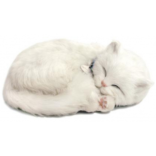 Companion Kitten - White Short Haired Kitten